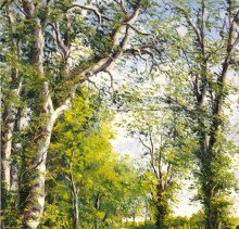 Corrstown Trees - Elsie Sheridan - original oil paintings and landscapes of Ireland.