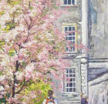 Cherry Blossom Trinity College